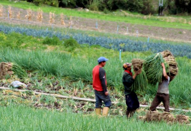 Campesinos near Bailadores.