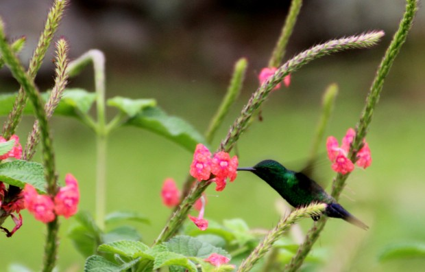 Hummingbirds are to Merida, what flies are to Australia.