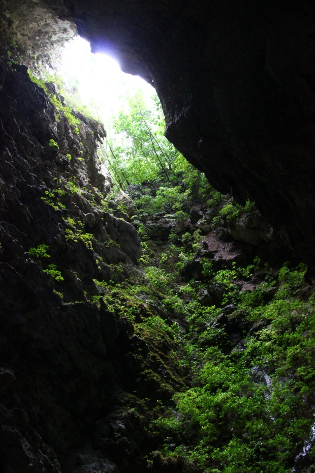 "The ""jardin"" in the Candelaria caves."