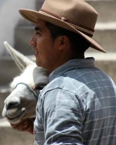 cropped donkey